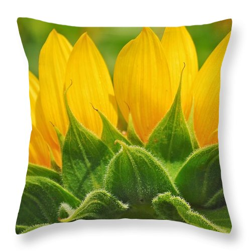 Sunflower Throw Pillow featuring the photograph Sister by Donna Shahan