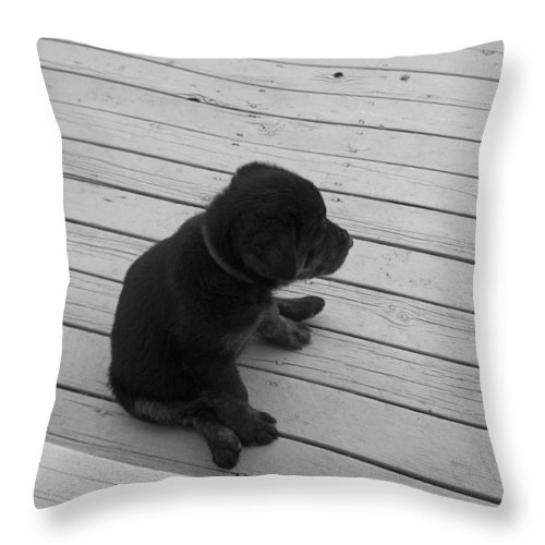 Puppy Dog Baby Relaxing Patience Black And White Photography Cute Throw Pillow featuring the photograph Sit And Think by Andrea Lawrence