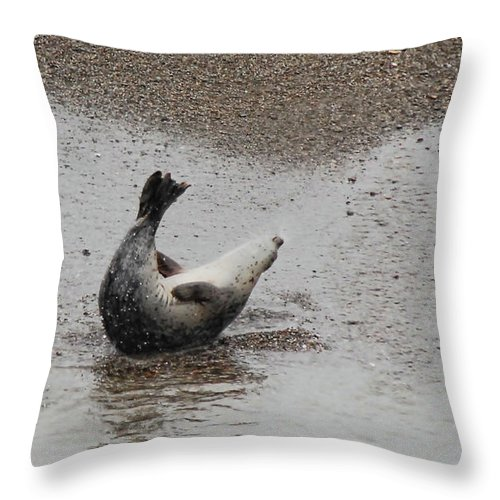 Seal Throw Pillow featuring the photograph Sit Ups by Donna Blackhall