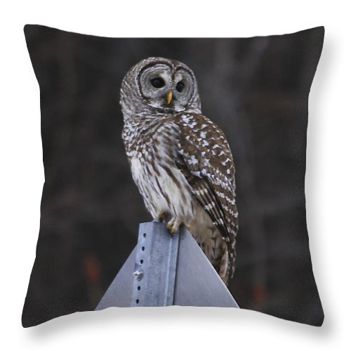 Bird Throw Pillow featuring the photograph Sitting On The Sign Post by Deborah Benoit