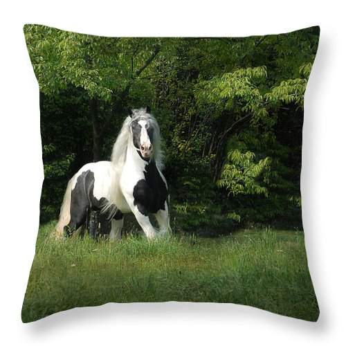 Horse Artwork Throw Pillow featuring the photograph Slainte by Fran J Scott