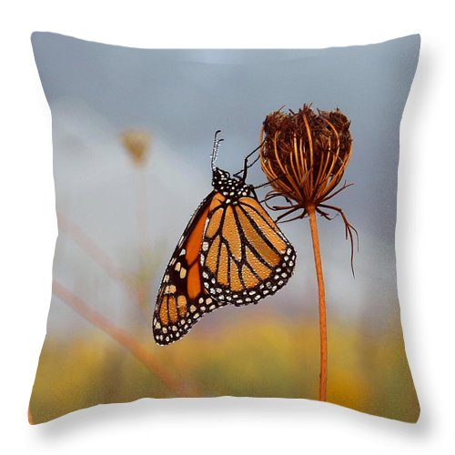 Monarch Butterfly Throw Pillow featuring the photograph Sleeping Beauty by Linda Murphy