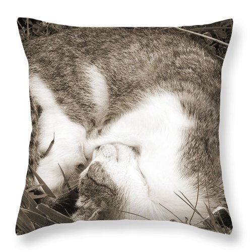 Pets Throw Pillow featuring the photograph Sleeping by Daniel Csoka