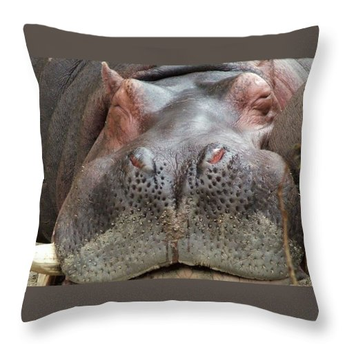 Hippopotamus Throw Pillow featuring the photograph Sleeping Hippo by Tiffany Vest