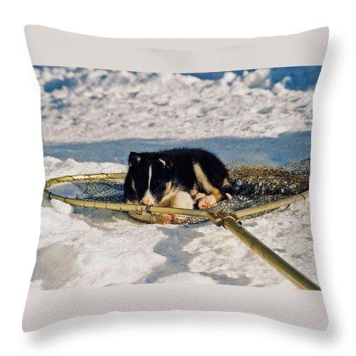 Alaska Throw Pillow featuring the photograph Sleeping Puppy by Juergen Weiss