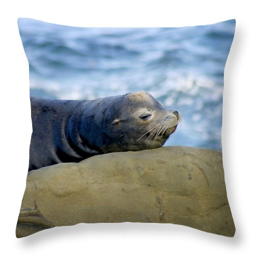 Seal Lion Throw Pillow featuring the photograph Sleeping Sea Lion by Anthony Jones