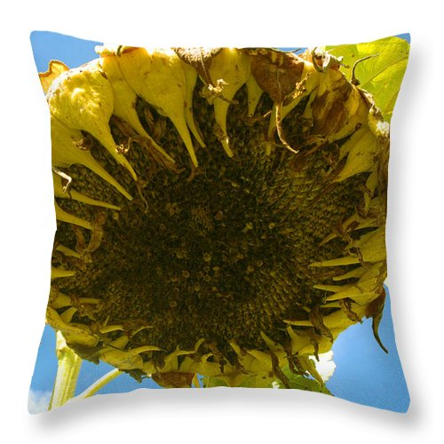 Sunflower Throw Pillow featuring the photograph Sleeping Sunflower by Trish Hale