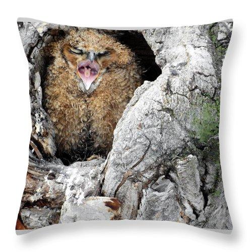Sleep Throw Pillow featuring the photograph Sleepy Owlet by Nicole Belvill