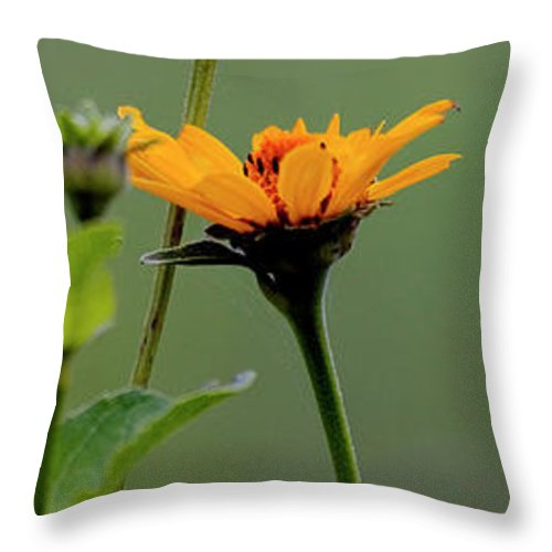 Prairie Throw Pillow featuring the photograph Slice of Prairie Flowers - Panel by Mark Braun