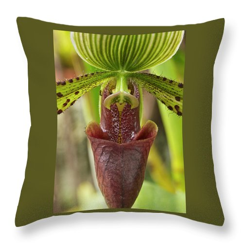 Orchids Throw Pillow featuring the photograph Slipper Orchid by Michael Peychich