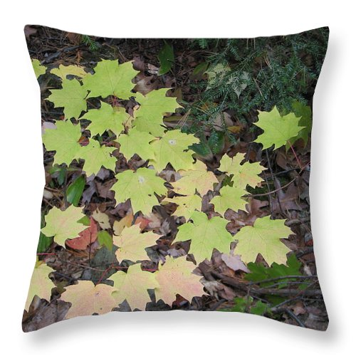 Leaves Throw Pillow featuring the photograph Slow Fade by Kelly Mezzapelle