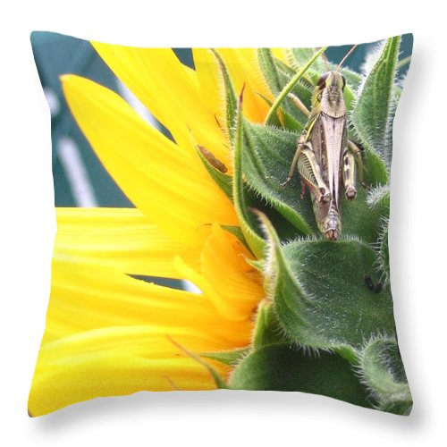 Sunflower Throw Pillow featuring the photograph Small Break by Line Gagne