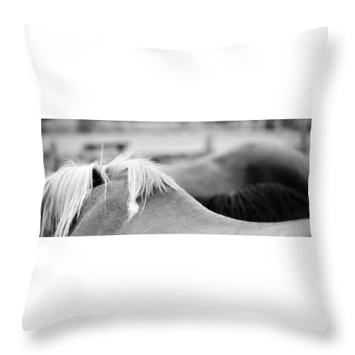 I Go About Looking At Horses And Cattle. They Eat Grass Throw Pillow featuring the photograph Small Hills by Luc Bovet