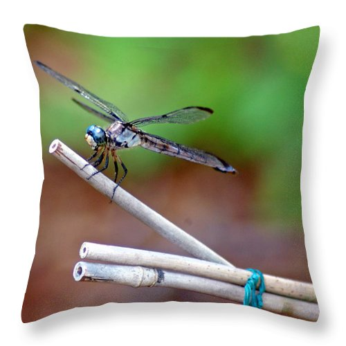 Dragon Fly Throw Pillow featuring the photograph Smile Pretty by Donna Bentley