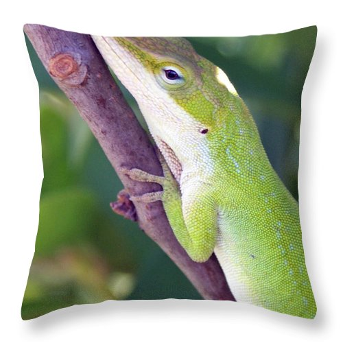 Animal Throw Pillow featuring the photograph Smile by Shelley Jones
