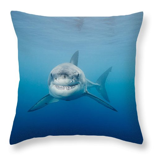 e7af6566abd0 Animal Throw Pillow featuring the photograph Smiling Great White Shark by  Dave Fleetham - Printscapes