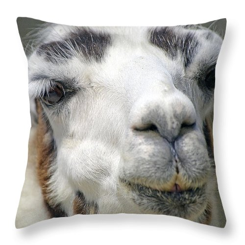 Llama Throw Pillow featuring the photograph Smug Llama by Kenneth Albin