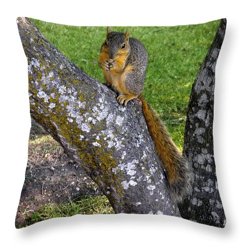 Nature Throw Pillow featuring the photograph Snack Time by Lucyna A M Green