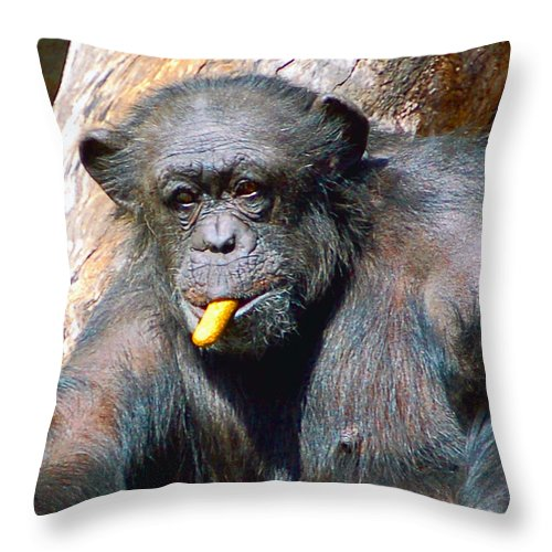Primate Throw Pillow featuring the photograph Snacking Chimpanzee II by Donna Proctor