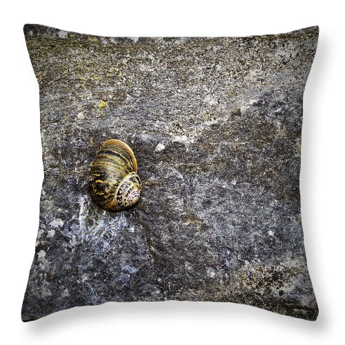 Irish Throw Pillow featuring the photograph Snail At Ballybeg Priory County Cork Ireland by Teresa Mucha