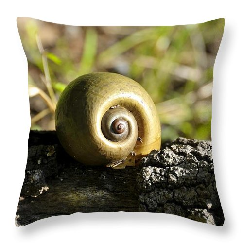 Snail Throw Pillow featuring the photograph Snail by David Lee Thompson