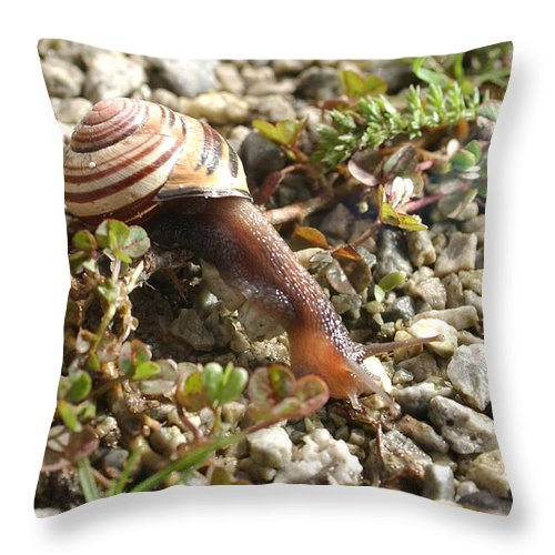 Snail Throw Pillow featuring the photograph Snail On Rocks by Steve Somerville