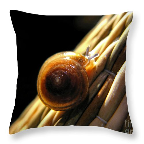 Macro Throw Pillow featuring the photograph Snail by Todd Blanchard