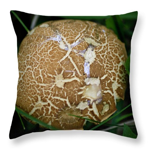 Fungus Throw Pillow featuring the photograph Snail Trails Squared by Teresa Mucha