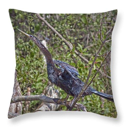 Snakebird Throw Pillow featuring the photograph Snake Bird by Kenneth Albin