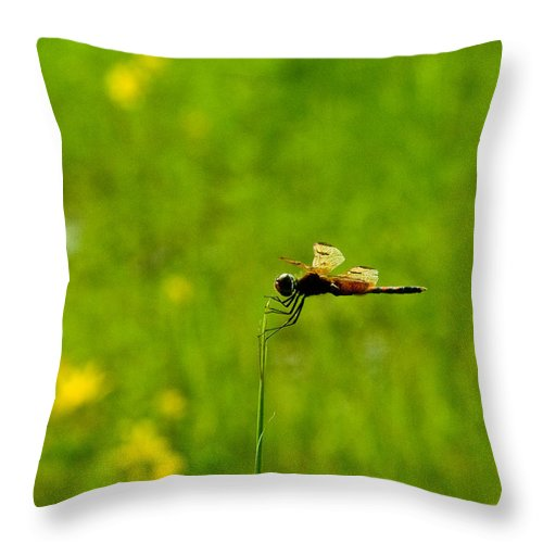 Snake Throw Pillow featuring the photograph Snake Doctor Resting by Douglas Barnett