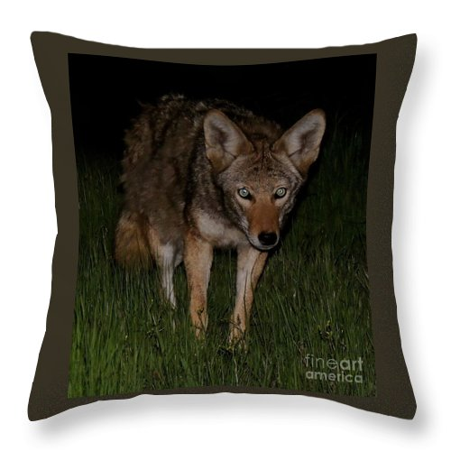 Wildlife Throw Pillow featuring the photograph Sneaking A Peek by Traci Hallstrom