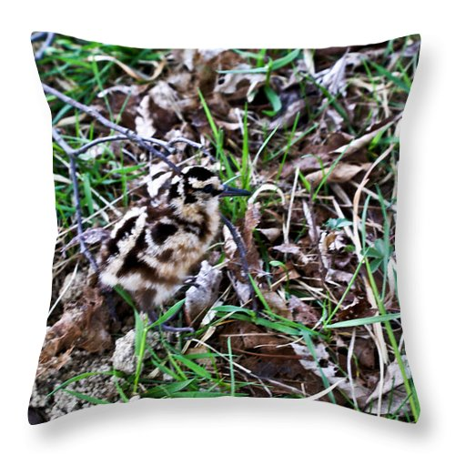 Snipe Throw Pillow featuring the photograph Snipe In Camouflage 2 by Douglas Barnett