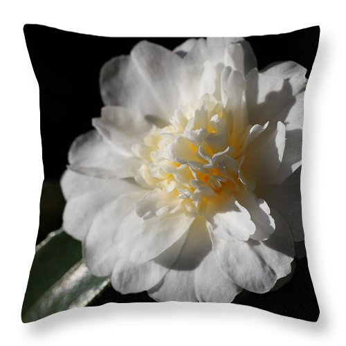 Camellia Throw Pillow featuring the photograph Snow Flurry by Tammy Pool