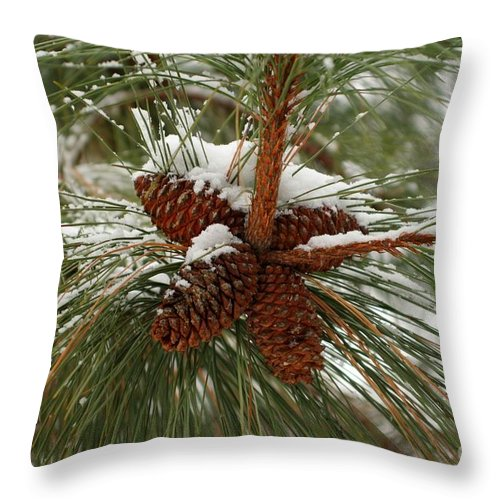 Pine Throw Pillow featuring the photograph Snow In The Pine by Idaho Scenic Images Linda Lantzy