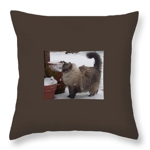 Cats Throw Pillow featuring the photograph Snow Kitty by Debbi Granruth