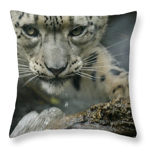 Animals Throw Pillow featuring the photograph Snow Leopard 11 by Ernie Echols