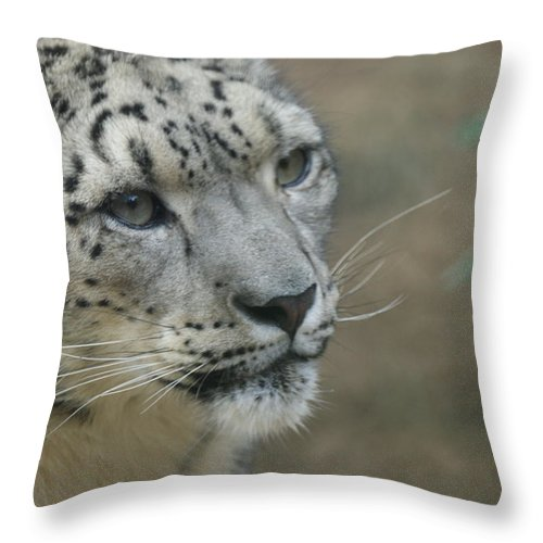 Animals Throw Pillow featuring the photograph Snow Leopard 8 by Ernie Echols