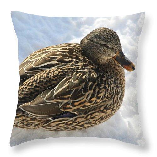 Mallard Throw Pillow featuring the photograph Snow Mallard by Lauri Novak