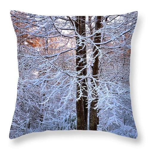 Snow Throw Pillow featuring the photograph Snow Maple Morning by Dave Martsolf