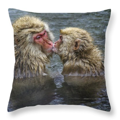 Snow Monkey Throw Pillow featuring the photograph Snow Monkey Kisses by Michele Burgess