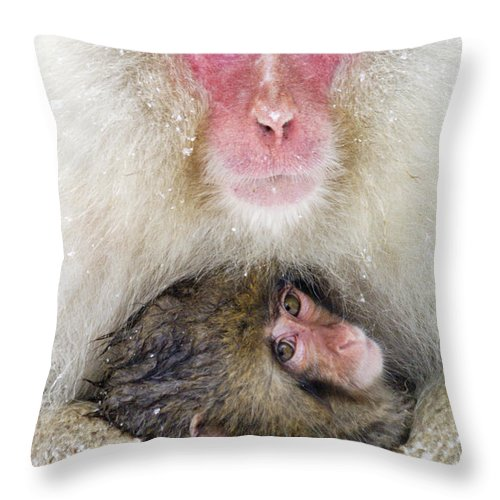 Japan Throw Pillow featuring the photograph Snow Monkey Love by Michele Burgess