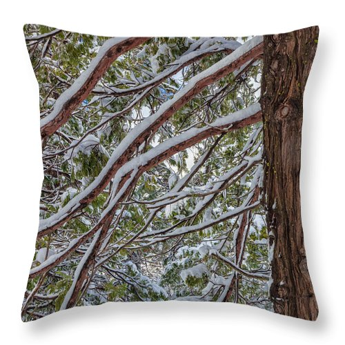 Landscape Throw Pillow featuring the photograph Snow On The Branches by Jonathan Nguyen