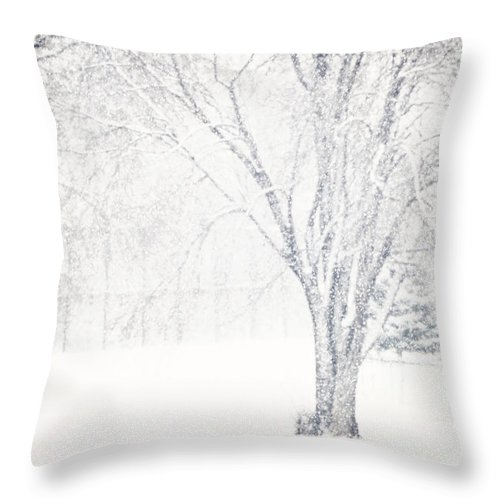 Throw Pillow featuring the photograph Snow Storm by Sylvia Coomes