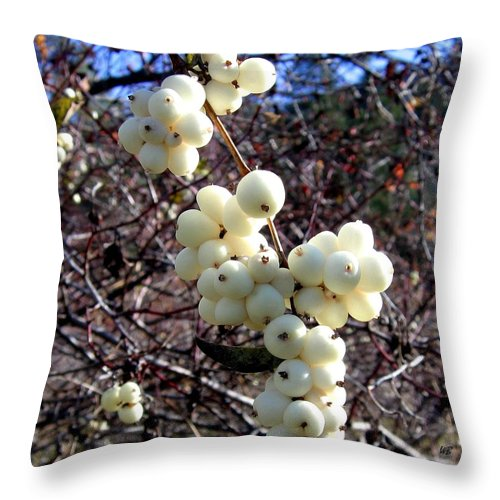 Autumn Throw Pillow featuring the photograph Snowberries by Will Borden