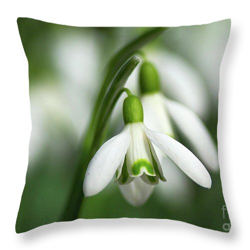 Snowdrops Throw Pillow featuring the photograph Snowdrops by Sharon Talson