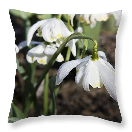 Snowdrops Throw Pillow featuring the photograph Snowdrops by Teresa Mucha