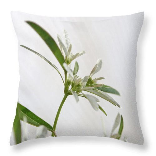 Flower Throw Pillow featuring the photograph Snowflake by Holly Kempe