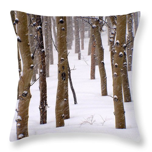 Aspen Throw Pillow featuring the photograph Snowy Aspen by Carol Milisen