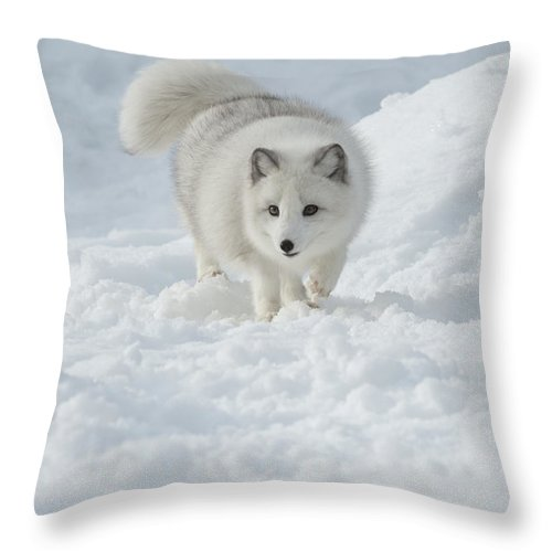 Wildlife Throw Pillow featuring the photograph Snowy Day Stroll by Sandra Bronstein
