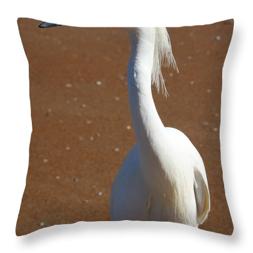 Bird Beach Sand White Bright Yellow Curious Egret Long Neck Feather Eye Ocean Throw Pillow featuring the photograph Snowy Egret by Andrei Shliakhau